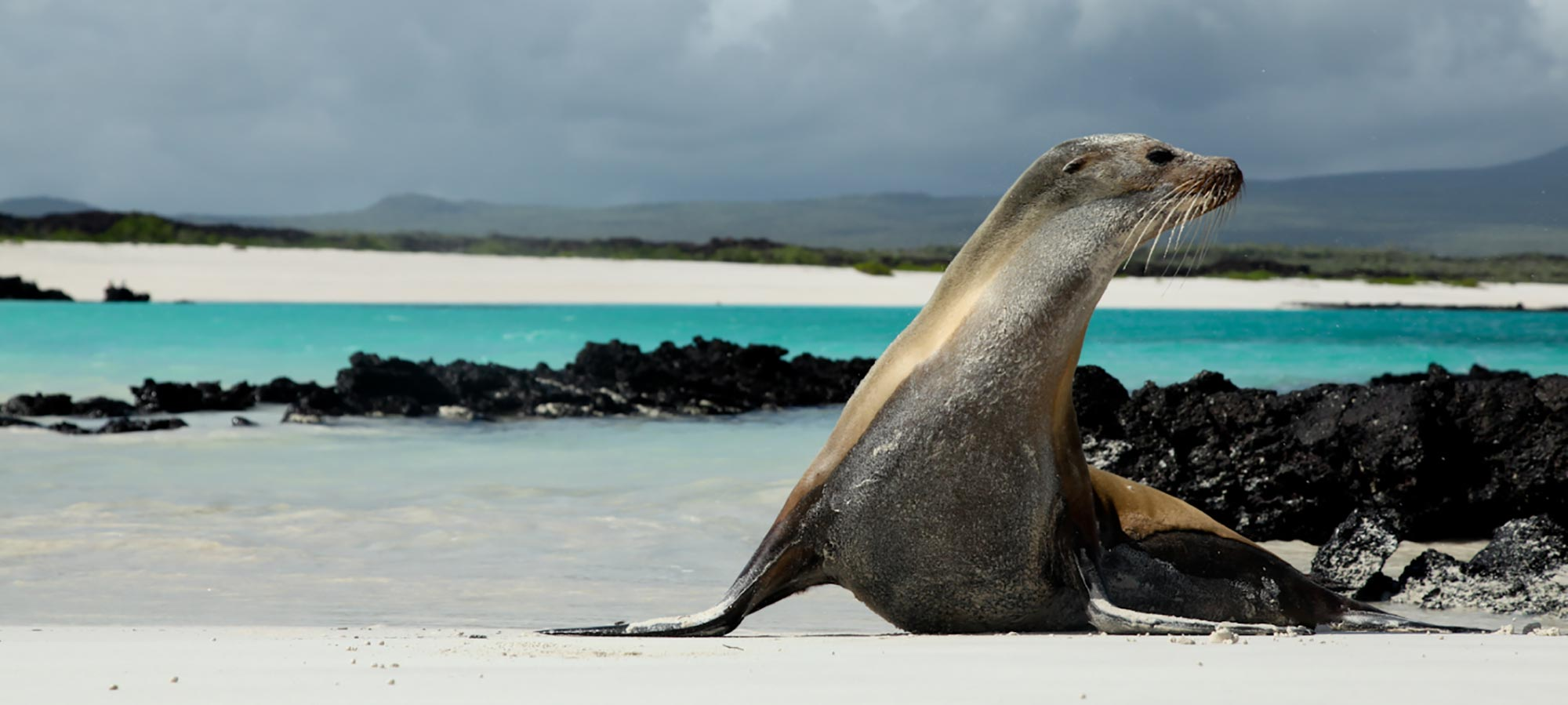 Isabela-Essential-Journey-Banner-2 Galapagos Wildlife Discovery 5 Days