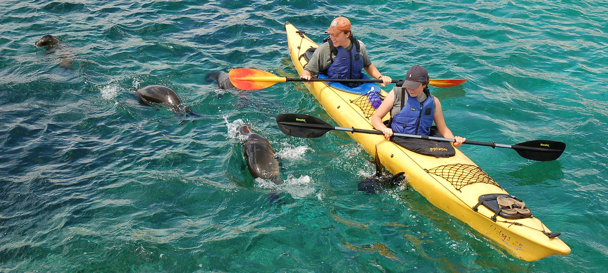 Kayak-with-Sea-Lions-in-San-Cristobal Galapagos Adventure, 7 Days plus 2 nights in Quito