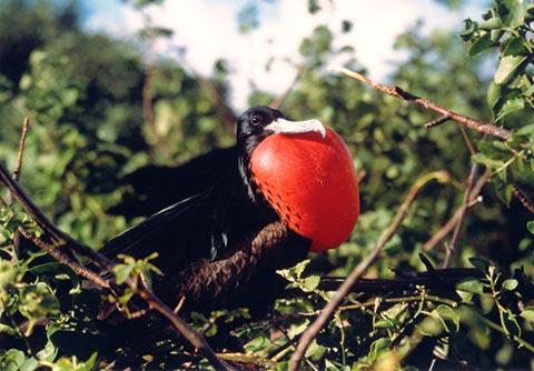 dummy Best Galapagos Wildlife Discovery, 5 Days