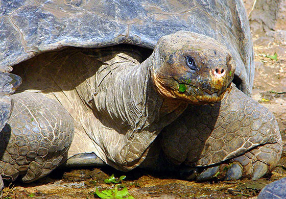 dummy Galapagos Adventure, 7 Days plus 2 nights in Quito
